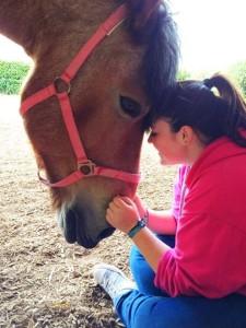 Tiere helfen menschen pferd
