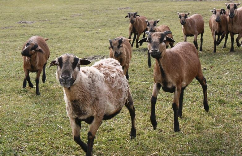 Herde  Rudel, Schwarm oder Herde? - Fische, Frettchen, Hunde, Kaninchen ...